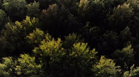 lighting up : Aerial View. Flying over the beautiful autumn trees in forest. Aerial camera shot. Autumn  Fall landscape. 4k