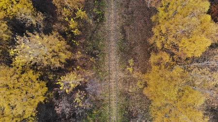 abstract painting : Flying over the railway that passes through the forest. Autumn. Aerial view. 4K