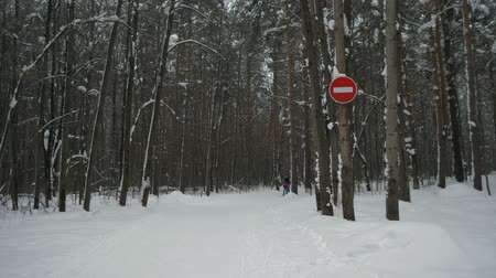 priority : Sign travel is prohibited in the winter pedestrian forest. Road signs in the winter pedestrian forest. 4K