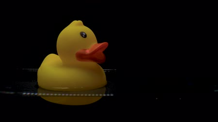bathhouse : Yellow rubber duck floats in water on black background. Stock Footage