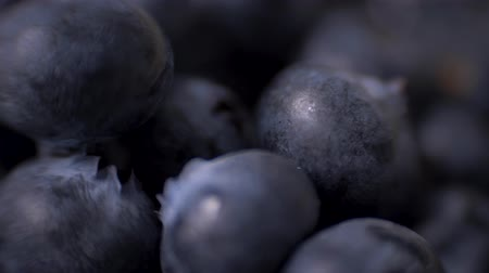 bilberry : Detail of Blueberries. Macro trucking shot. 4K resolution top view.