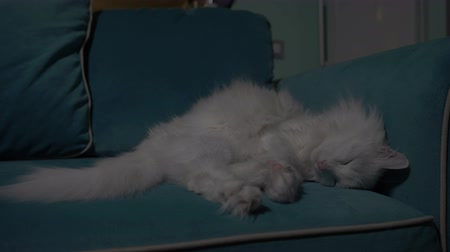göz kamaştırıcı : White cat lying on the couch in the evening with the kitchen in the background. Concept: loneliness, relaxation, rest, waiting. Clous-up. 4K