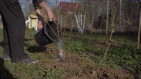 watering can : A young man watering after planting a tree. A man from a bucket watering raspberry bushes. 4K