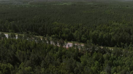 生態系 : The camera flies over a pine forest in the direction of the road. Aerial view 4K