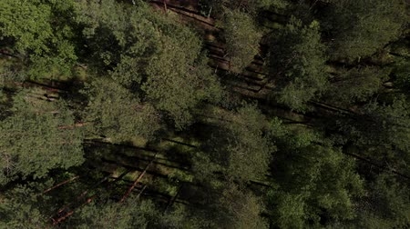 estonia : Birds eye view of beautiful green forest aerial shot. Aerial view 4K. The camera flies over the coniferous forest. The camera is looking down