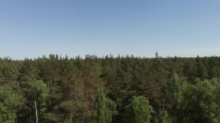 early morning : Birds eye view of beautiful green forest aerial shot. Aerial view 4K. The camera flies up in front of the forest above the treetops