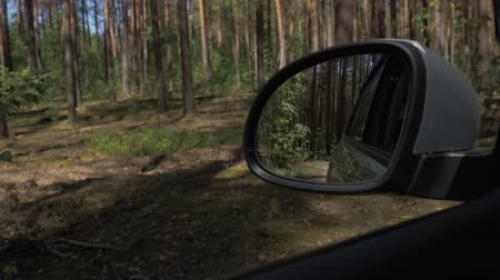 fülke : View from the car window on the go. Sunlight glints through the trees. View from the car window on the side mirror while driving through the woods. 4K