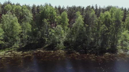 off shore : A young man stands on the shore of a forest lake. The camera moves up and away from the young man standing on the shore of a forest lake. 4K Stockvideo