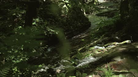 Mountain stream in the rainforest