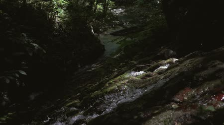 upstream : Mountain stream in the rainforest. Slow motion