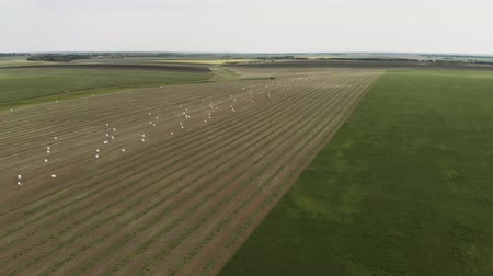 Flying to the side and above endless golden field of bales of mowed hay. Amazing straight flat harvesting and agricultural field of gold straw and yellow wheat. Aerial view 4K Wideo