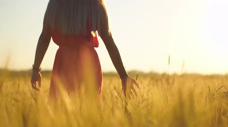 walk behind : Young woman walking in wheat field on sunset Stock Footage