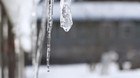 растворение : Close-up of dripping icicle in slow motion Стоковые видеозаписи