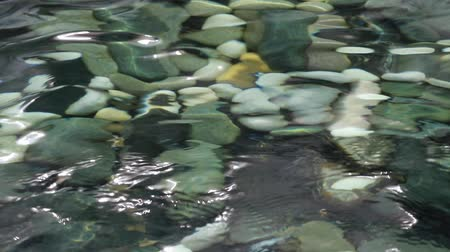 water feature : seeing the pebbles at the bottom of a pond through wobbling water surface Stock Footage