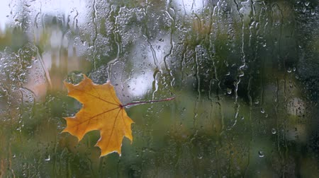 video footage maple leaf on wet glass  autumn season on the other side