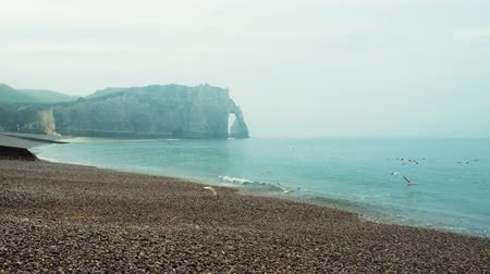 normandie : Seagulls taking off, sea shore of Etretat, Normandy, France