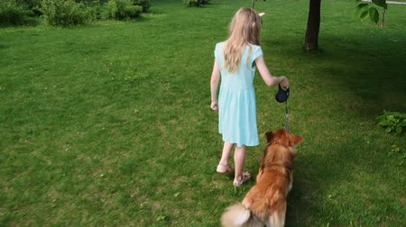 outside : child girl training a dog on a green lawn Stock Footage
