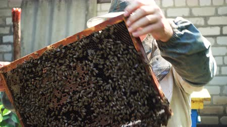 улей : Beekeeper is working with bees and beehives