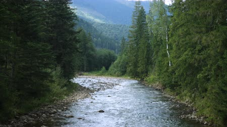 beautiful mountain river running through the pine forest Stock Footage