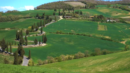 homeopático : winding road through the green tuscanian hills at the Siena region