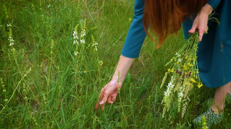 salvia : girl collecting a flowers at the meadow