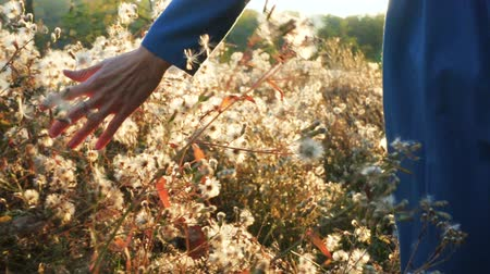 blooms : girl running at the autumn field through the fluff flowers Stock Footage