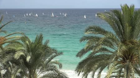veículo aquático : large group of sailboats and palm trees