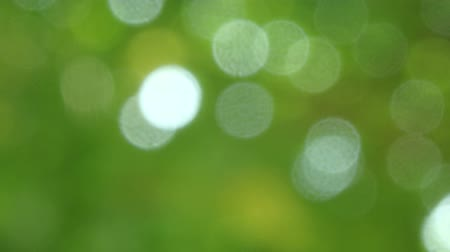 Green nature background with motion of defocus sunlight. (HD footage no sound)