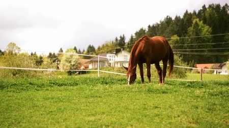 hoofs : A horse alone on a lawn eating grass. Cloudy weather behind the horse and sunshine on the grass. Great atmosphere and happy horse swinging around his tail. Stock Footage