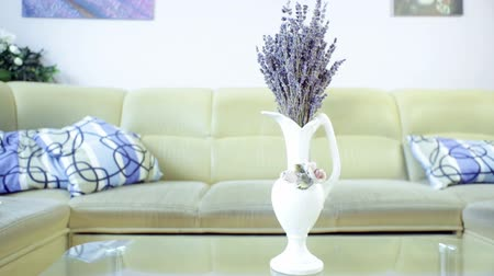 herbal : Vase of lavender flower on the table in living room, with sofa in background. Lavender as room decoration and fragrance.  Lavandula (common name Lavender) is a genus of 39 species of flowering plants in the mint family, Lamiaceae. Cultivated extensively i Stock Footage