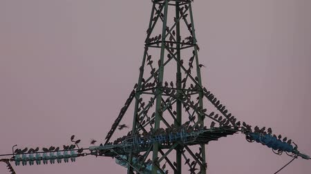 marco nacional : Electrical tower with a lot of birds Stock Footage