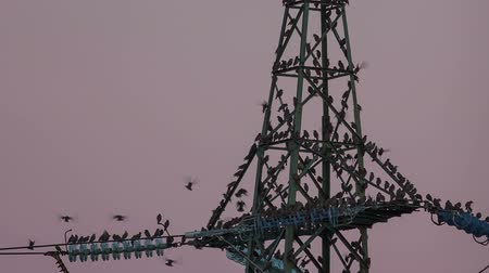 marco nacional : Mass of birds searching for empty seat on electrical tower Stock Footage