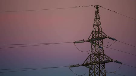 marco nacional : Electrical tower with a lot of birds at dawn Stock Footage