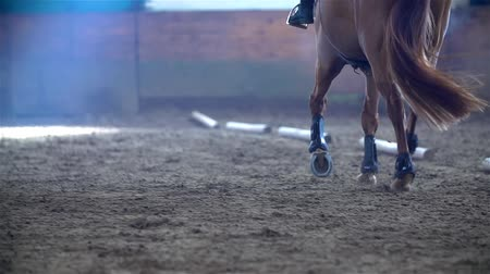 horse riding : SLOW MOV: Brown Horse Running in Cold Riding Hall