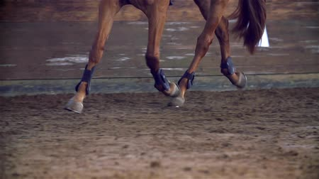 horse riding : Brown Horse Running in Riding Hall Close Up Slow Motion Stock Footage