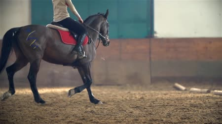koňmo : Slow Motion Riding Horse Galloping Dostupné videozáznamy