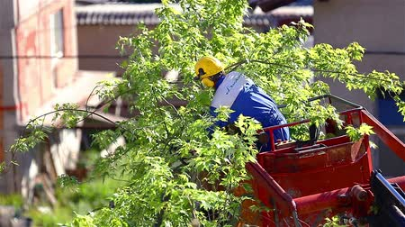 aparar : Person pruning of trees. Professional worker on a crane cutting trees because of dangerous branches. Stock Footage