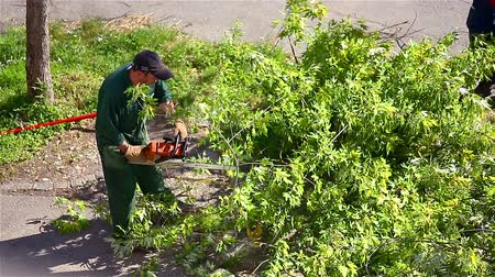 обрезки : Sawing big branches from tree. Professional worker on a crane cutting trees because of dangerous branches.
