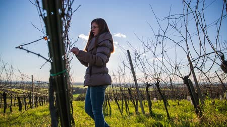 úponka : Person walking in vineyard with sun shinning. Shot of vineyard branches in winter and person checking their buds health before spring blossom. Dostupné videozáznamy
