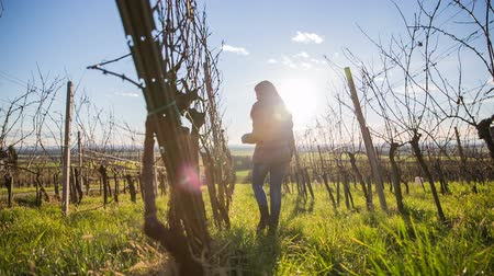 úponka : Person check vineyard branches. Shot of vineyard branches in winter and person checking their buds health before spring blossom.