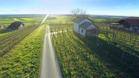 еще : Flying over countryside with vineyards at sunset 4K. Aerial footage of vineyards in spring while nothing yet growing on branches beautiful sunset in background and green grass everywhere.