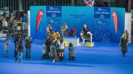 mezinárodní : LJUBLJANA, SLOVENIA - JANUARY 2015: International dog exhibition winners. Proud dogs and owners showing to photographers at dog exhibition in Slovenia.