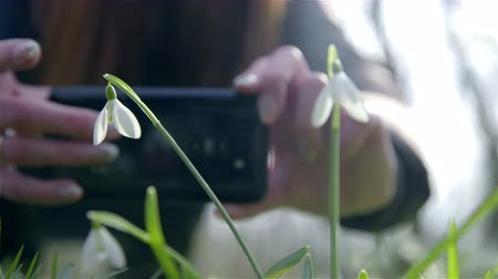 képek : Person taking picture of snowdrops close up 4K. Woman with smartphone in hands making photo of snowdrops growing in green glade on a sunny day. Shot from behind the snowdrops with person in background.