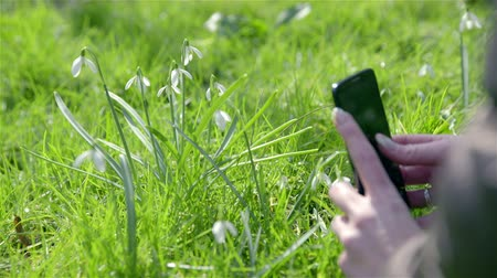 fotografando : Photographing snowdrops with mobile 4K. Low angle sliding beside black smartphone device with snowdrops in background, person take picture. Sunny day, woman with beautiful nails.