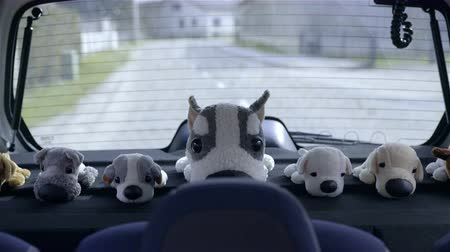 vicces : Dog toys in line travel with car 4K. Cute dog plush toys on back shelf of car looking at camera while traveling on road. Stock mozgókép