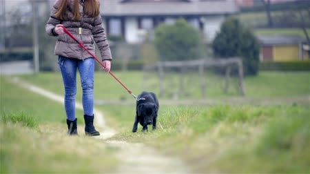 лабрадор : Dog laying on grass and continue to walk 4K. Female person training black Labrador to walk beside on leash, showing dog how. Walking on gravel path in countryside.