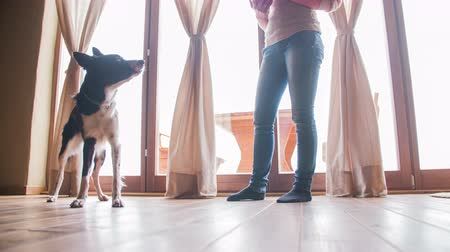 playing with a dog : Dog happy jump on owner and sit still 4K. Low angle view in front of terrace bright windows of young black and white puppy and female owner standing giving orders to dog. Stock Footage