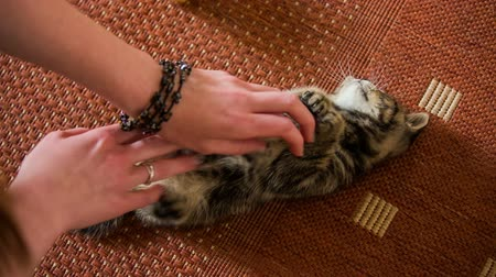 дружба : Caressing baby cat white belly.Top view of woman with beautiful hands petting cute little kitten laying on back and enjoying the stroking on belly.