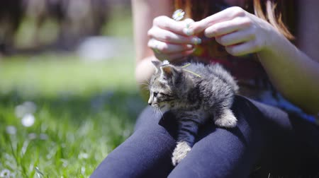 caresses : Person put flowers on kitten head . Close up of female person with baby cat outside sit on lawn and have fun. Beautiful kitten looking around. Stock Footage