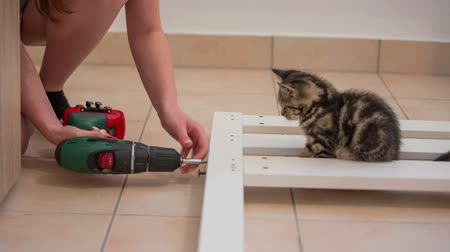 Screwing wooden parts while cat observing. Putting together white sleeping bed frame on floor at home. Kitten laying beside.